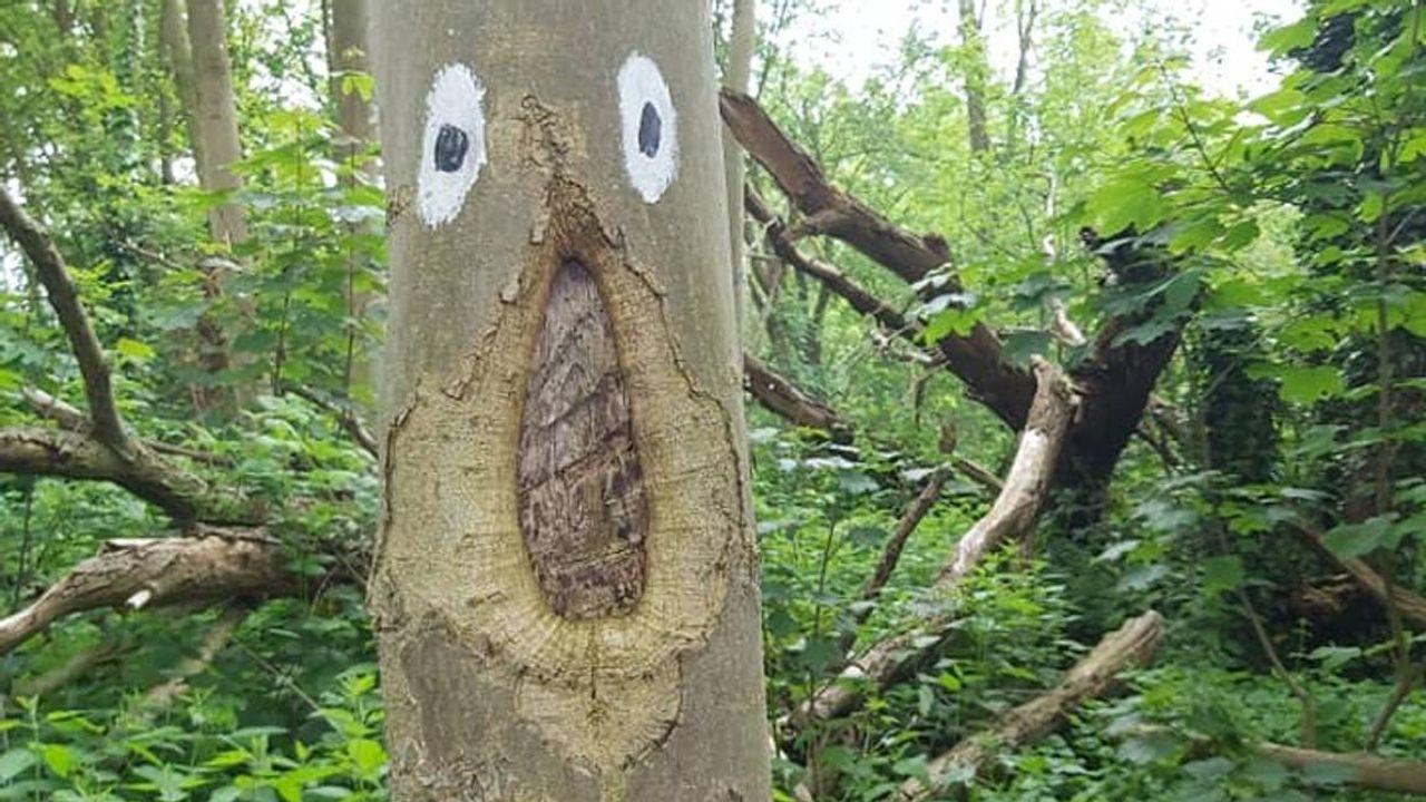 Glurende ogen op bomen zorgen voor sprookjesachtig bos in Son en Breugel