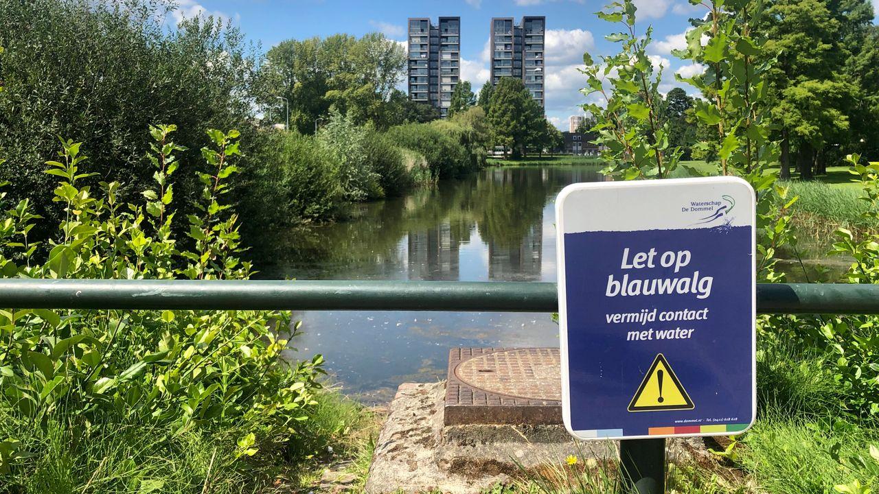 Blauwalg aangetroffen op vier plaatsen in Eindhoven