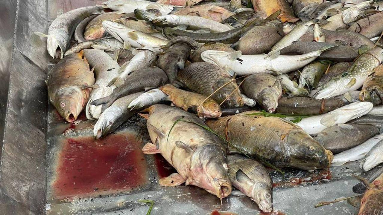 Honderden dode vissen in plas Eindhoven: 'Er wordt niets aan gedaan'