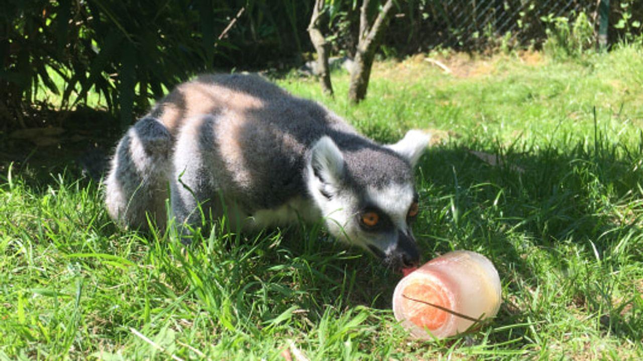 IJsjes voor dieren in Dierenrijk