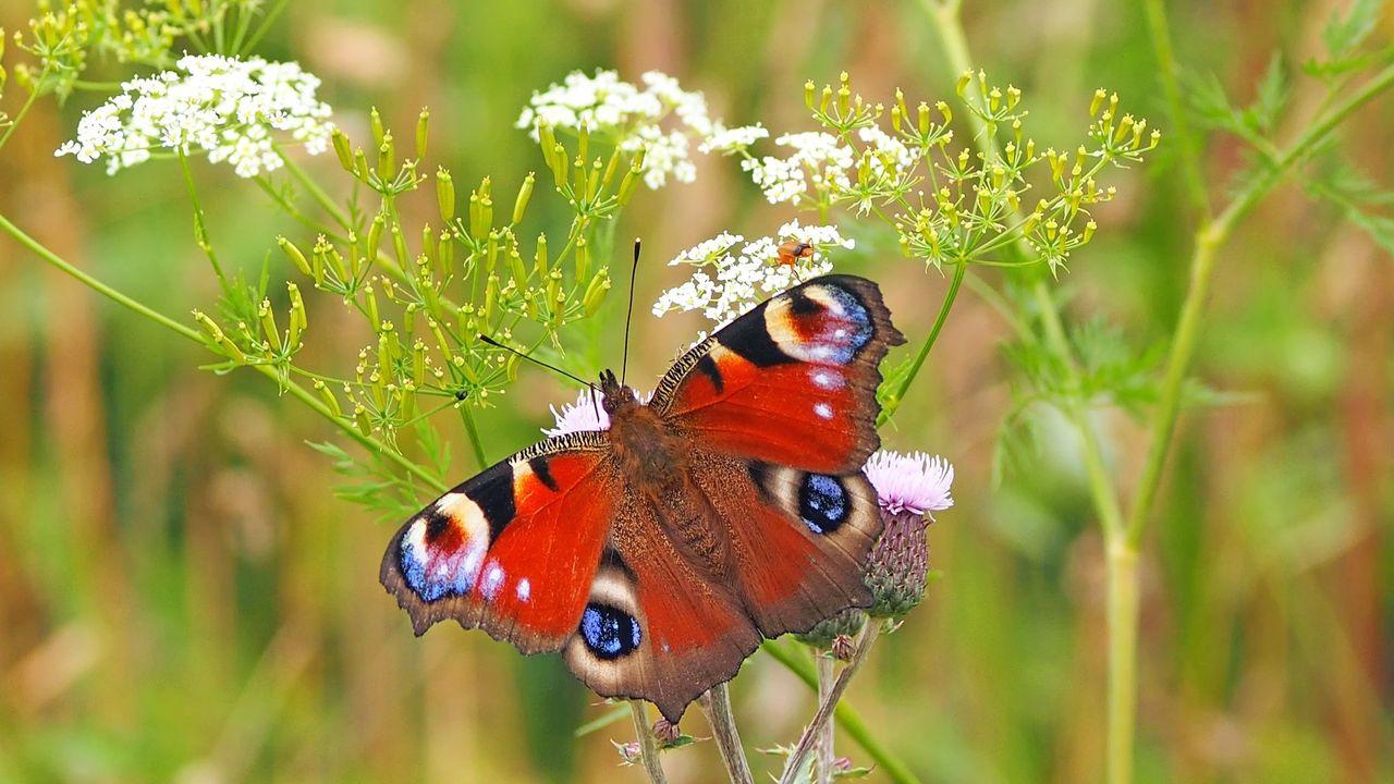 Vlinderhuisje moet biodiversiteit stimuleren in Mierlo
