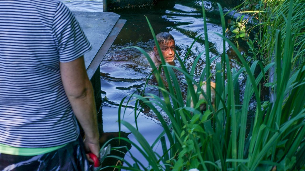 Man springt in kanaal om hond te redden