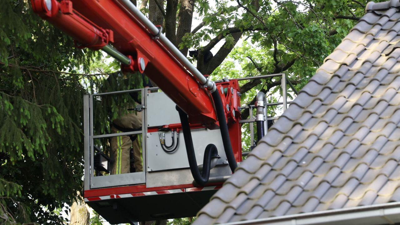 Kat hele middag in boom in Son en Breugel, brandweer schiet te hulp