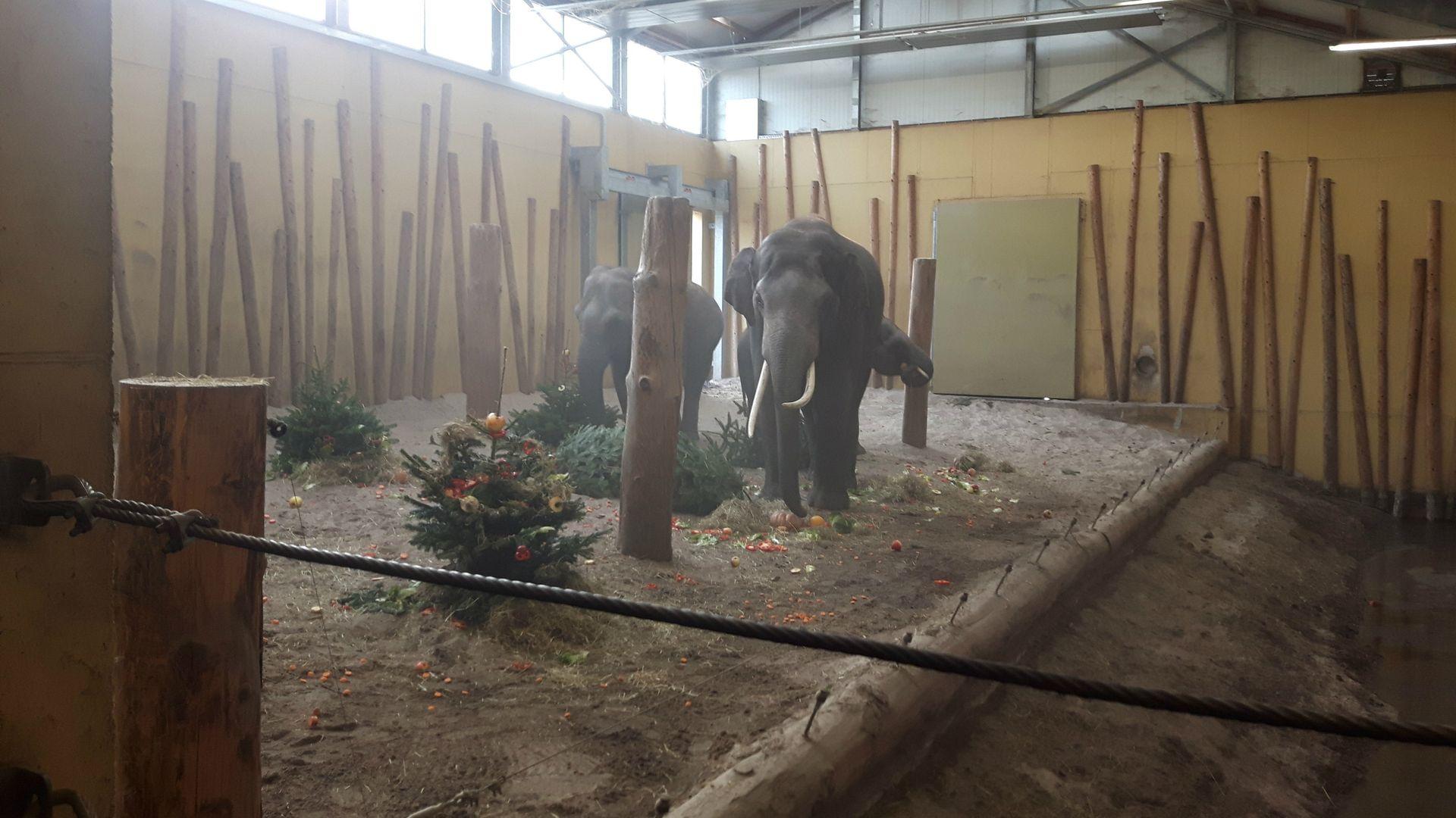 Olifanten kerstdiner