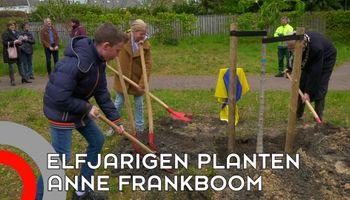Anne Frankboom leeft voort.... in Son